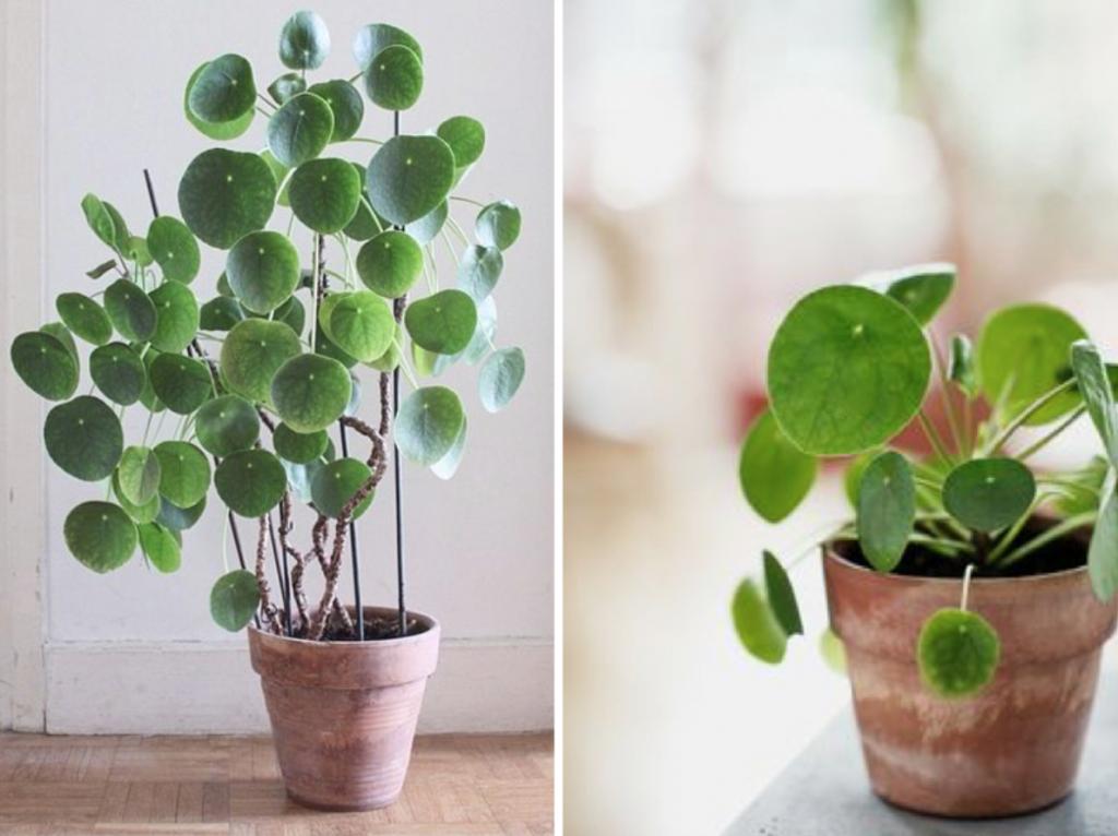 Den lille detalje planter sales styling by louise holm for Planter til koidam